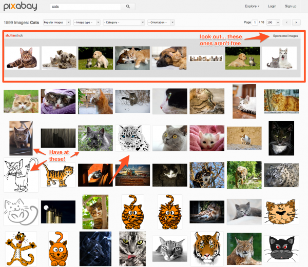 Can I get Sued for Using Images on my Blog - Free Images of Cats for your Blog