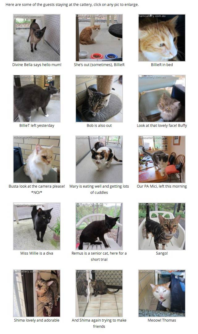 Can I get Sued for Using Images on my Blog - Aylesham Cattery