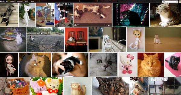 Can I get Sued for Using Images on my Blog - Flickr Filtered Kitties